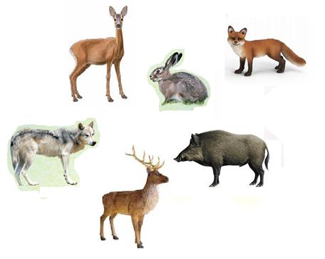 10.06.2020 Temat dnia: Świat zwierząt w Polsce.
